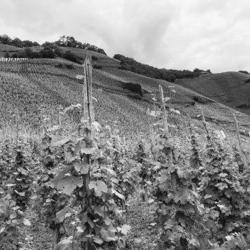 Mythos Mosel: Eine Rieslingreise 2019 von Ürzig bis Briedel