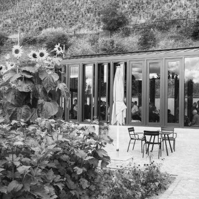 Weingut Cantzheim Probe im Glashaus