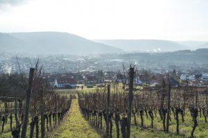Großlage, Lage, Gewann, VDP.Große Lage, VDP.Erste Lage, geschützte Ursprungsbezeichnungen der EU – droht das Bezeichnungschaos bei deutschen Weinen? 4