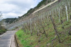 Großlage, Lage, Gewann, VDP.Große Lage, VDP.Erste Lage, geschützte Ursprungsbezeichnungen der EU – droht das Bezeichnungschaos bei deutschen Weinen? 1