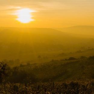 Seit 1.12.2020 wächst nur noch der zweitbeste Wein Würzburgs im Würzburger Stein…